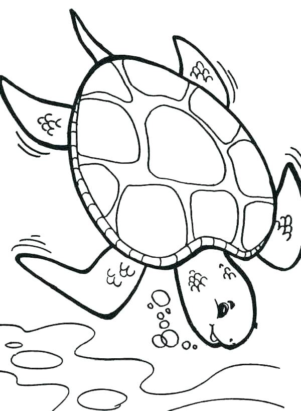 600x818 Turtle Color Page Turtle Coloring Page Baby Turtle Pictures Color