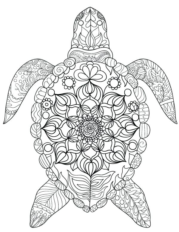 600x776 Turtle Coloring Page Click To See Printable Version Of Eastern Box
