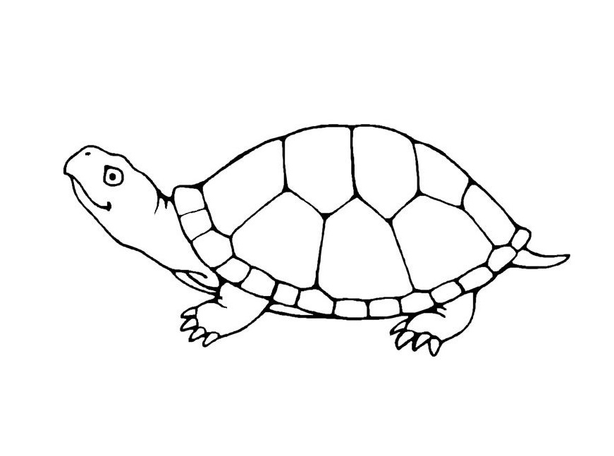871x647 Cute Turtle Coloring Pages