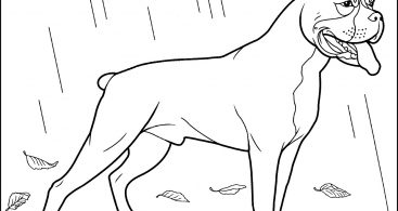 367x195 Boxer Dog Coloring Pages Coloring Page For Creativity