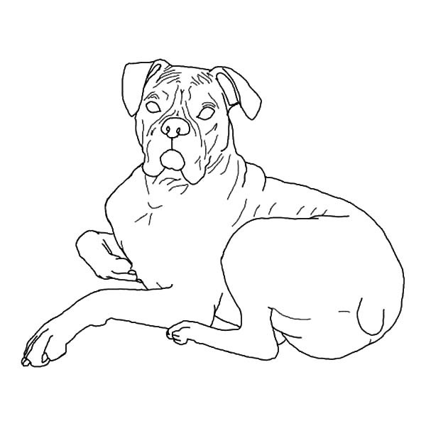 600x600 Boxer Dog Lying Down Coloring Pages Best Place To Color