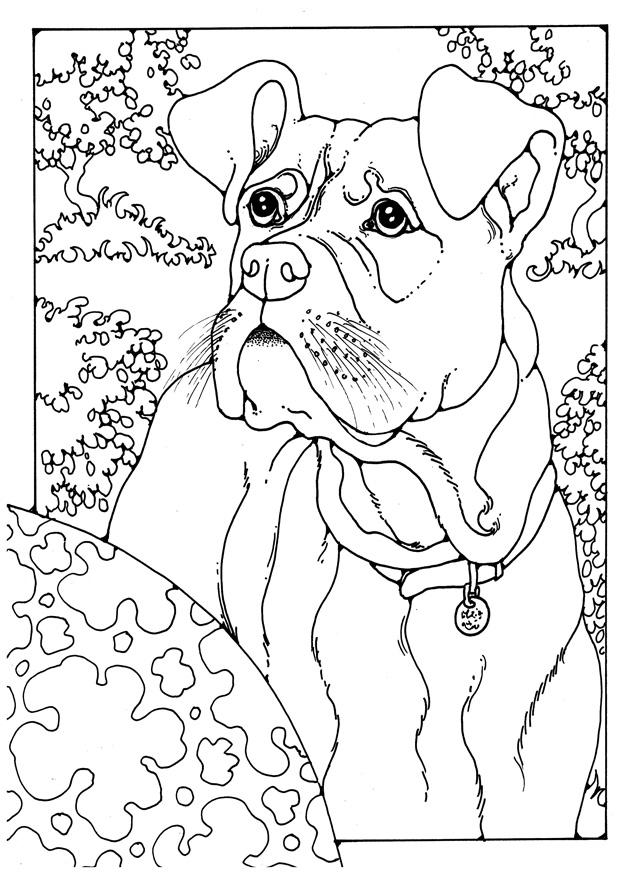 620x875 Coloring Page Boxer