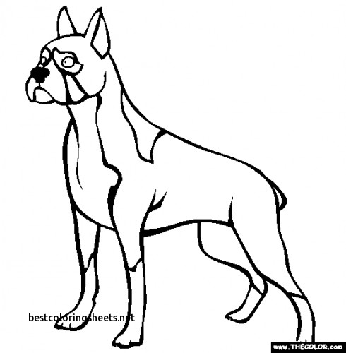 490x500 Awesome Boxer Dogs Coloring Pages Best Coloring Pages