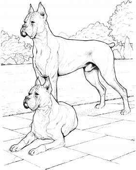 281x350 Two Boxer Dogs Paintings, Paintings And More Paintings