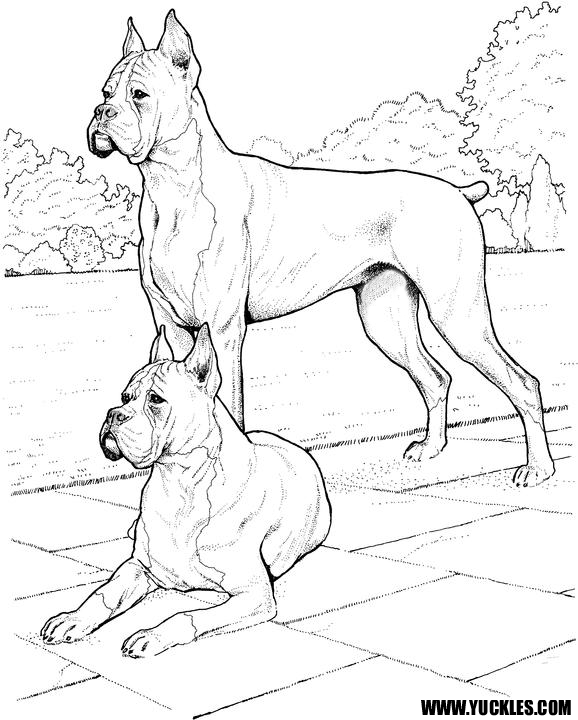 578x720 Boxer Coloring Page