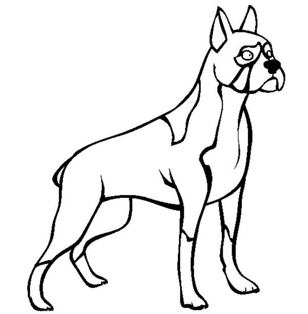 600x612 Boxer Coloring Pages Boxer Dog Standing Tall Colouring Page Happy