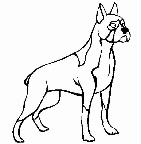 Boxer Puppy Coloring Pages