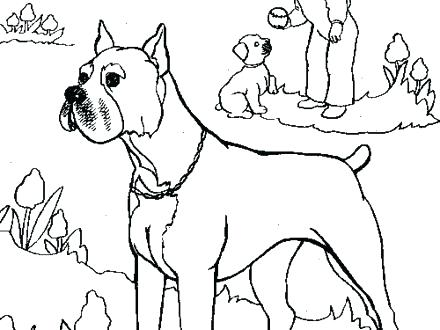 Boxer Puppy Coloring Pages At Getdrawings Com Free For