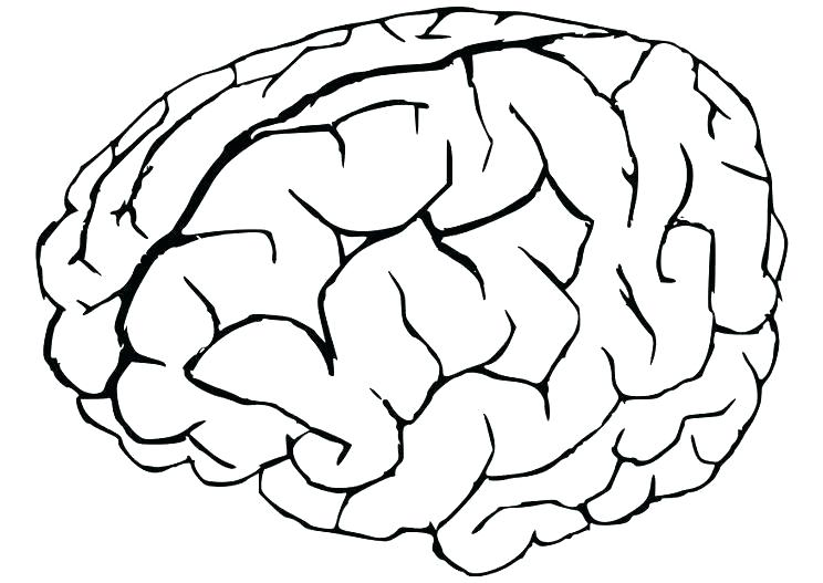 744x527 Brain Coloring Book As Well As Human Anatomy Coloring Book Human