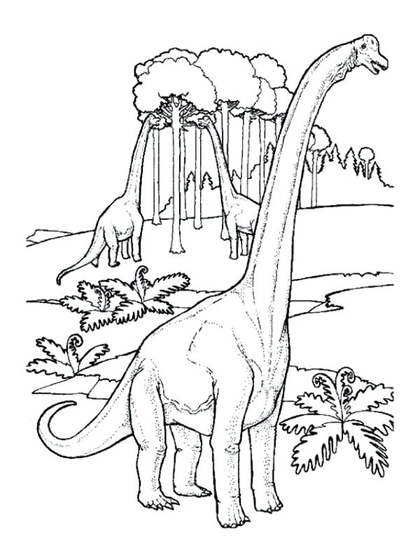 600x799 Brachiosaurus Coloring Page In The Jungle Coloring Page