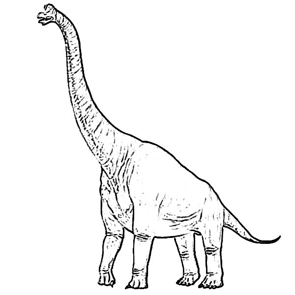 600x600 Brachiosaurus Coloring Page For Kids Color Luna