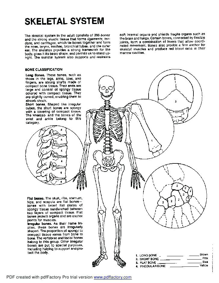 728x942 Anatomy And Physiology Coloring Book On Anatomy Coloring Pages