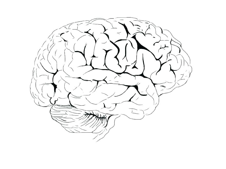878x659 Brain Color Page Brain Anatomy Coloring Pages Brain Coloring
