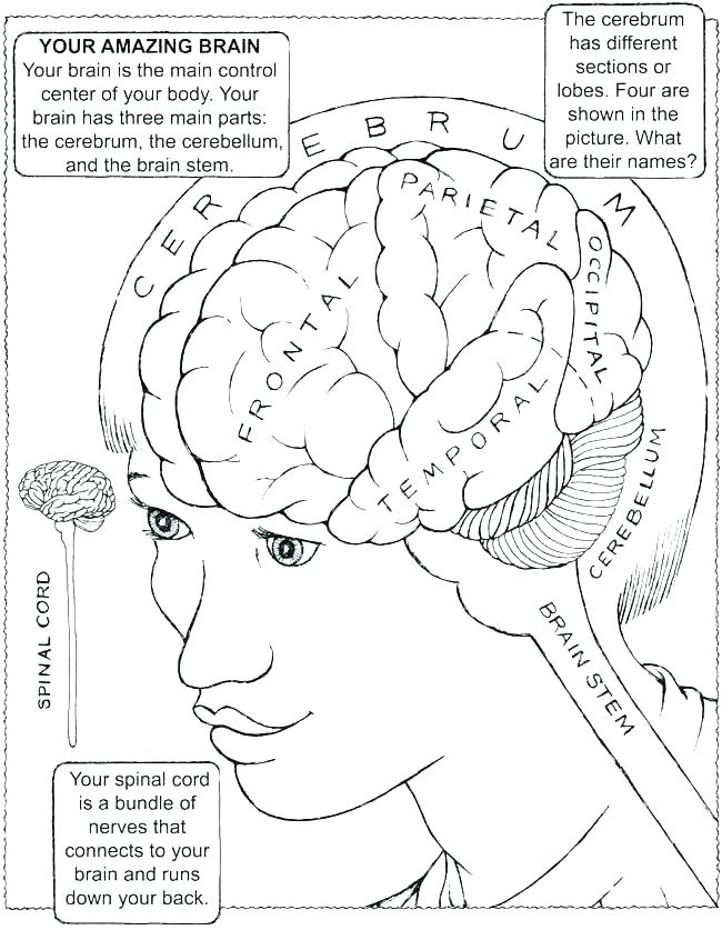 650x837 Brain Color Page Human Anatomy Coloring Pages Brain Coloring Page