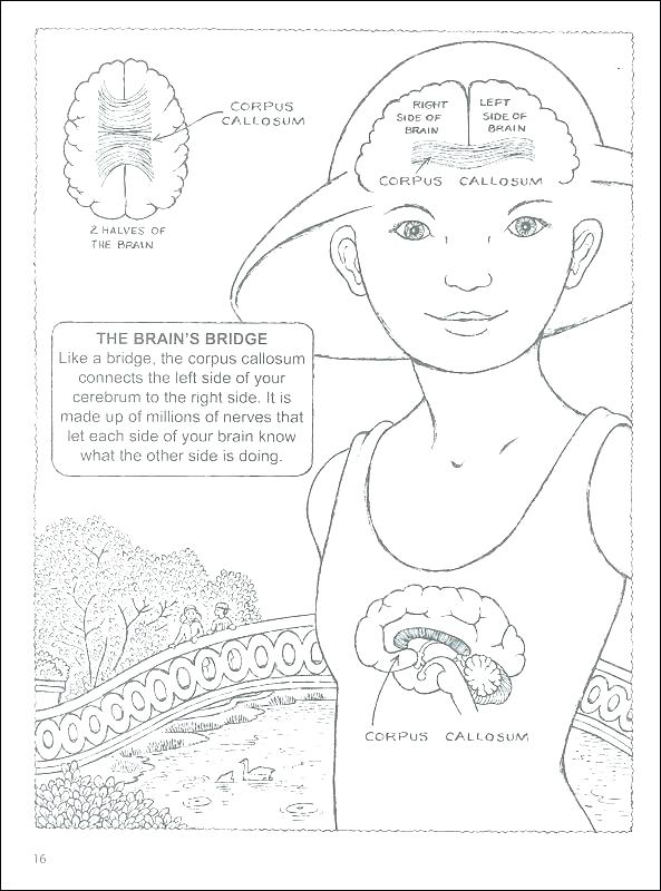 593x800 Brain Coloring Book Brain Anatomy Coloring Pages Brain Coloring