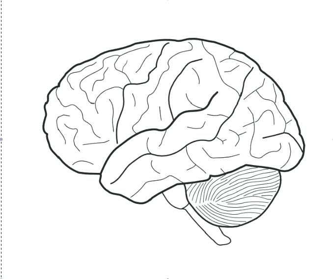 678x568 Brain Coloring Page Brain Coloring Pages Brain Coloring Page Brain