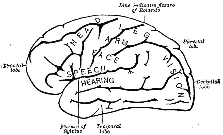878x533 Brain Coloring Sheet Brain Anatomy Coloring Pages Coloring Pages