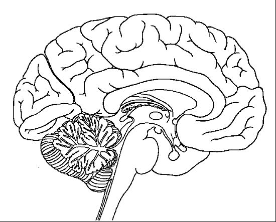 550x443 Brain Coloring Page Brain Coloring Pages To Print Drawn Brain
