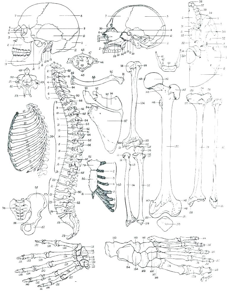 765x995 Brain Anatomy Coloring Pages Diagram Coloring Pages Brain Anatomy
