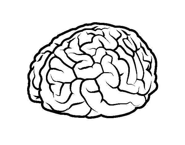 600x470 Brain Coloring Page Entrancing Brain Coloring Page