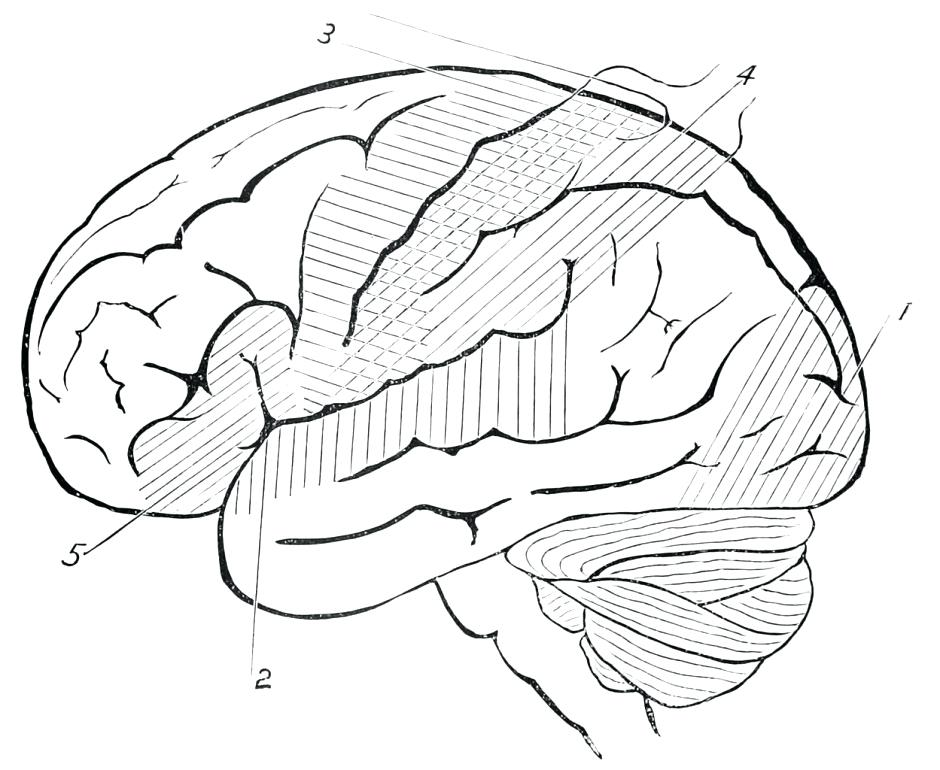 940x770 Brain Coloring Page Human Brain Coloring Pages Coloring Pages