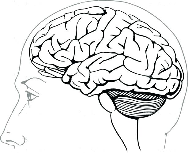 614x500 Brain Coloring Pages Medium Size Of Brain Coloring Page Pages