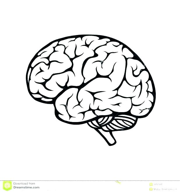 618x661 Brain Coloring Pages Printable Brain Coloring Of Brain Anatomy