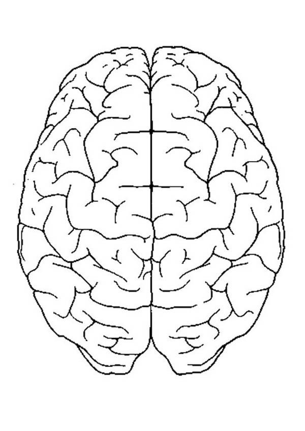600x848 Brain Coloring Page Brain Coloring Page