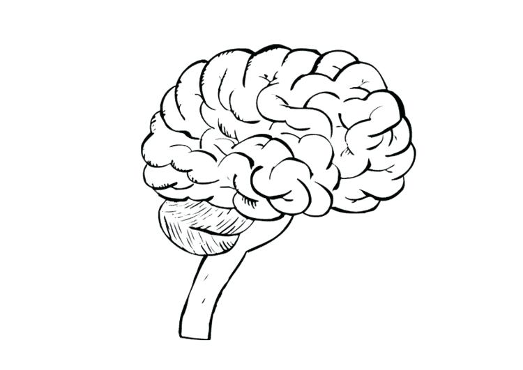 750x531 Coloring Page Of The Brain Coloring Page Brain Coloring Page Brain