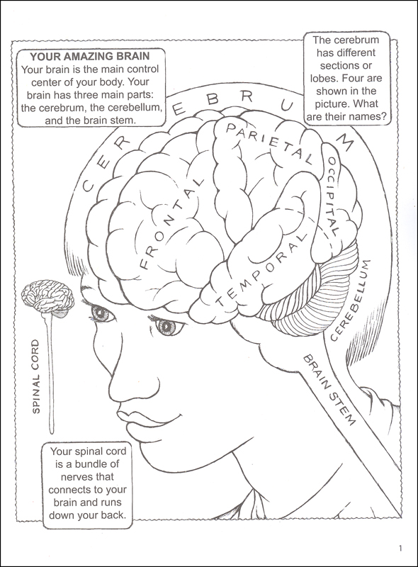590x800 Coloring Pages Human Brain Coloring Book