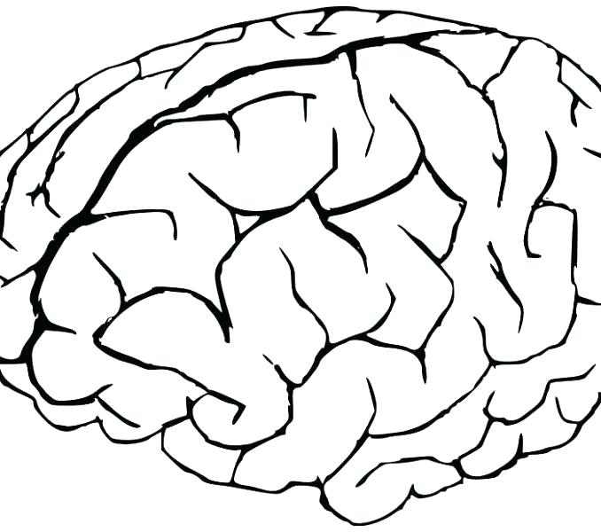 678x600 Brain Coloring Page