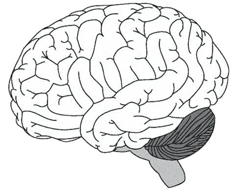 480x387 Brain Coloring Page Brain Coloring Page Brain Coloring Pages