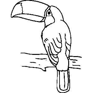 300x300 Best Brazil Swaps Images On Brazil, Birds And Parrots