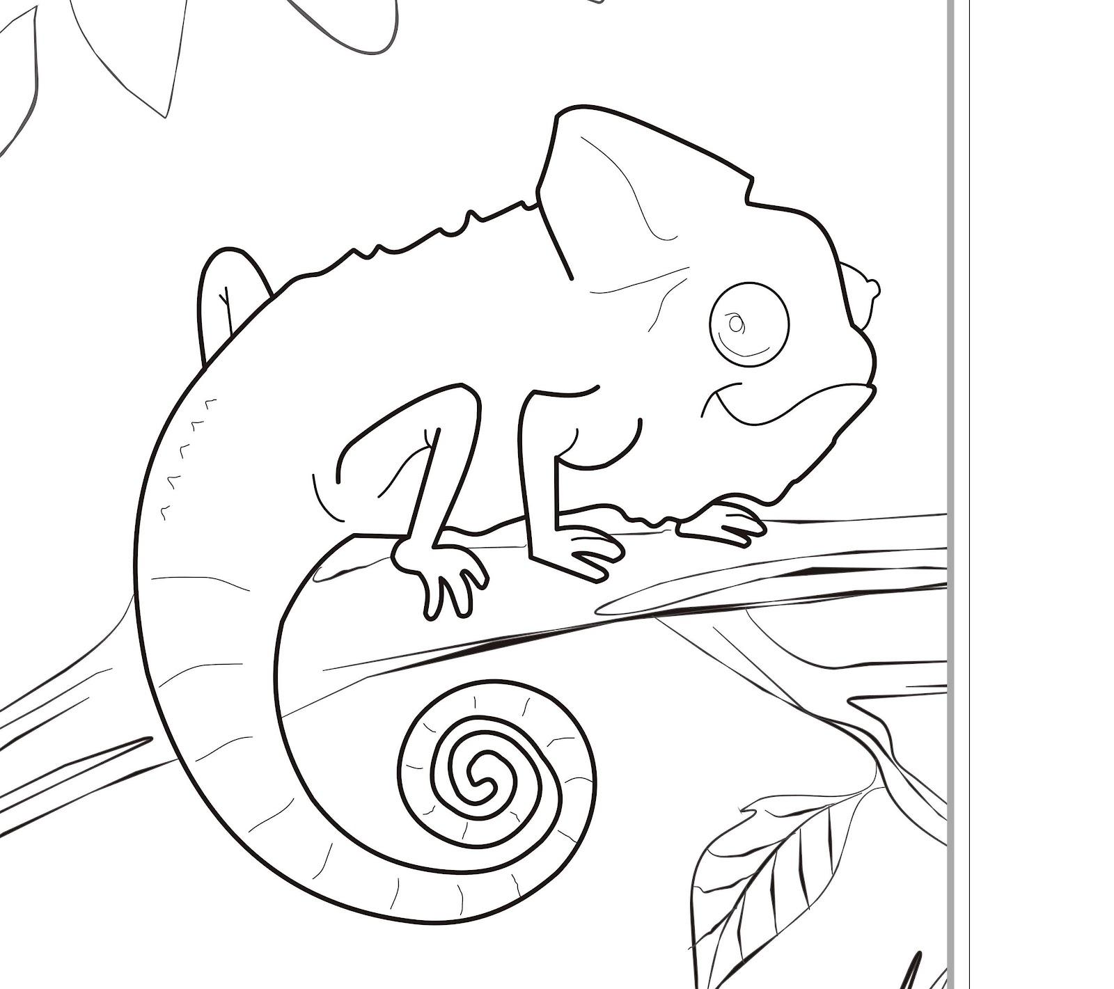 1600x1421 Brazil Animals Coloring Pages Bgcentrum