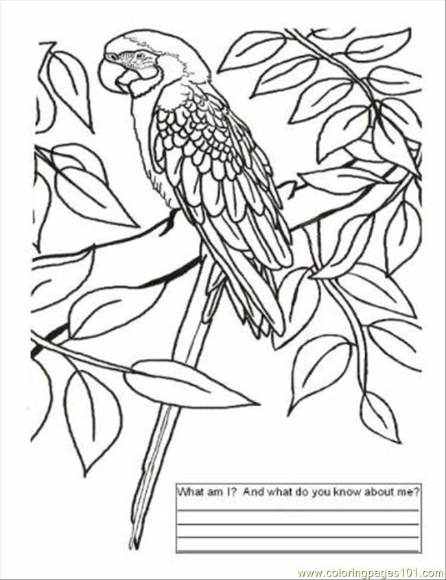 650x844 Brazil Color Page Coloring Page