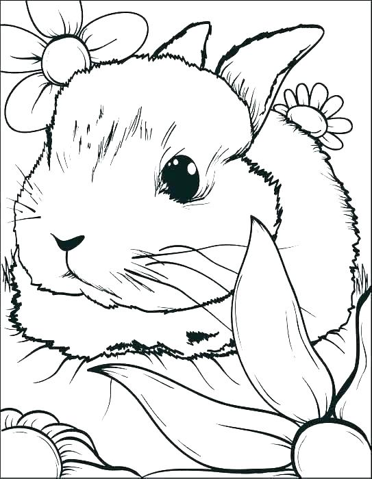 543x700 Rabbit Coloring Page Rabbit Coloring Pages Rabbit Coloring Pages