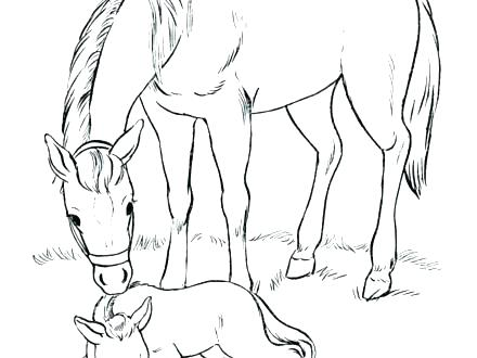 Breyer Horse Coloring Pages At Getdrawings Com Free For Personal