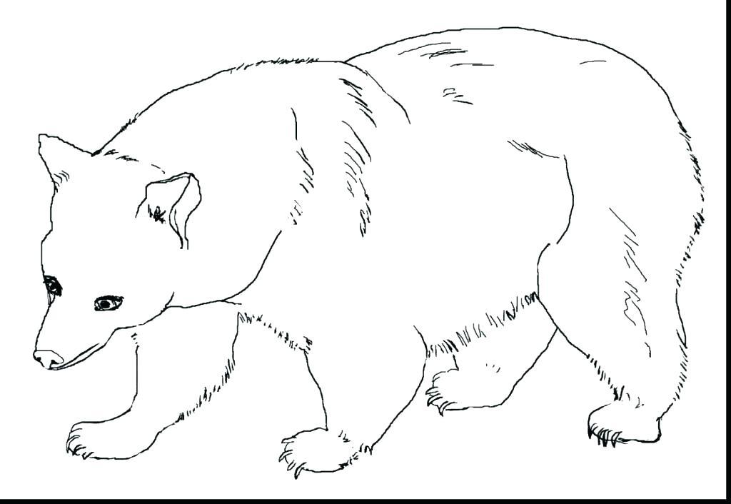 1024x706 Bear Coloring Page Brown Bear Coloring Page Big Brown Bear