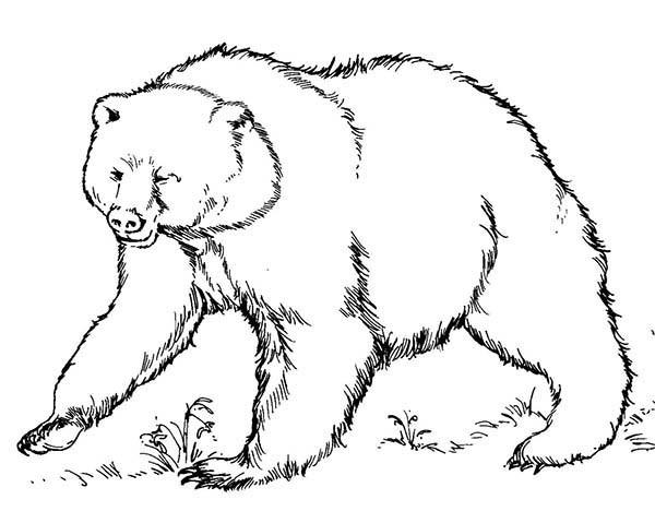 600x479 Brown Bear Coloring Sheet Free To Download Brown Bear Coloring