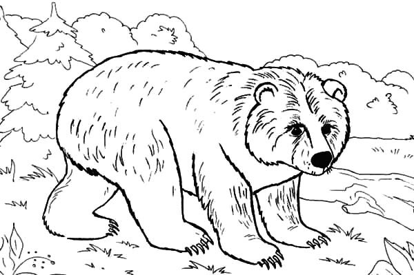 600x399 Brown Bear In The Jungle Coloring Pages Best Place To Color