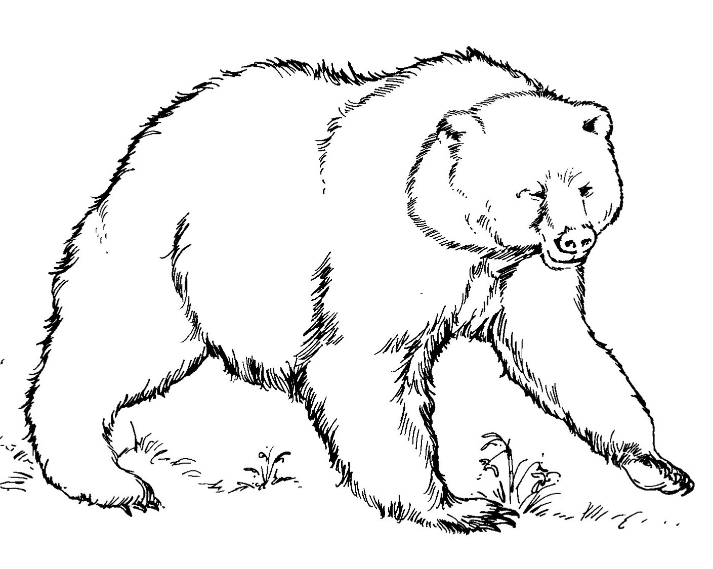 1409x1125 New Brown Bear Coloring Pages Postman Twat Coloring Pages Free