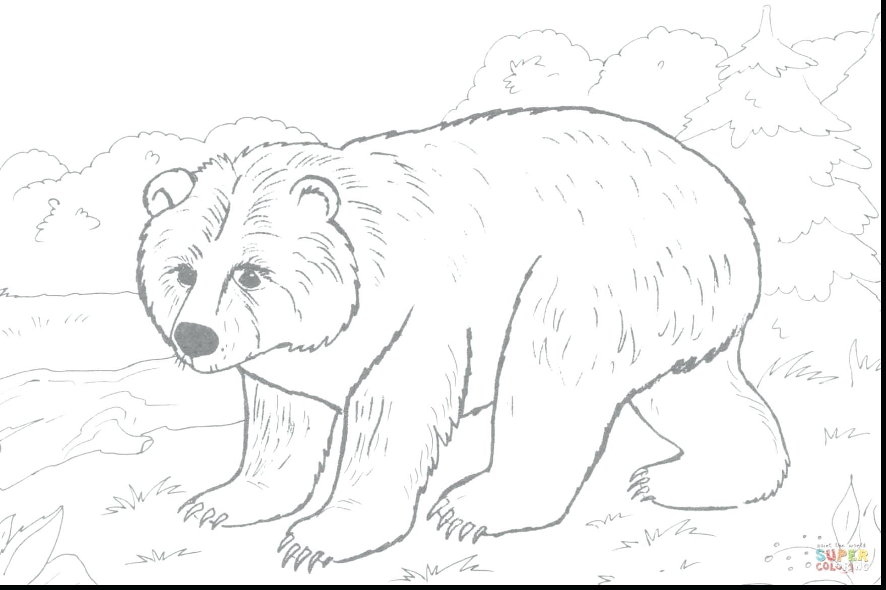 1758x1171 Young Brown Bear Coloring Page Pages