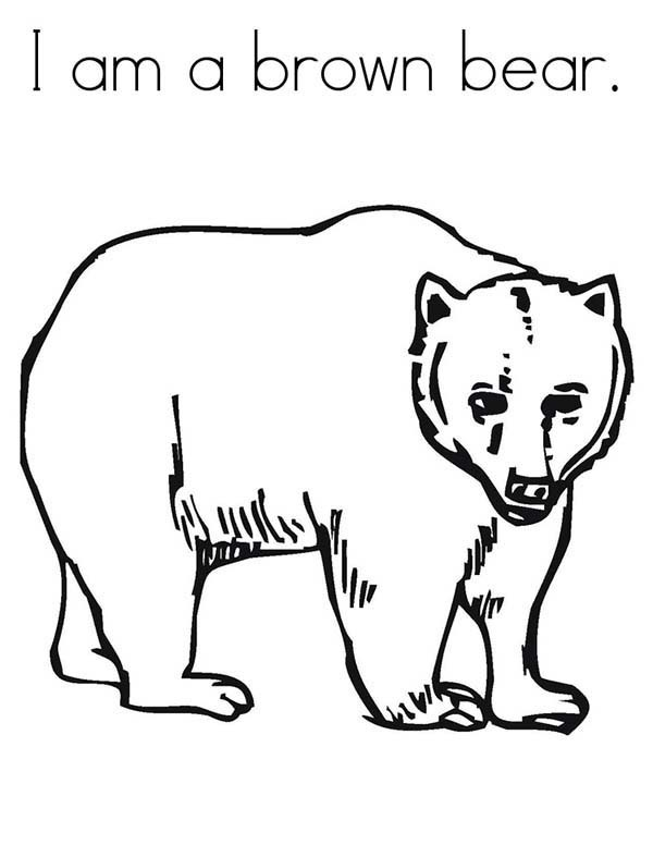 600x776 Brown Bear Coloring Page