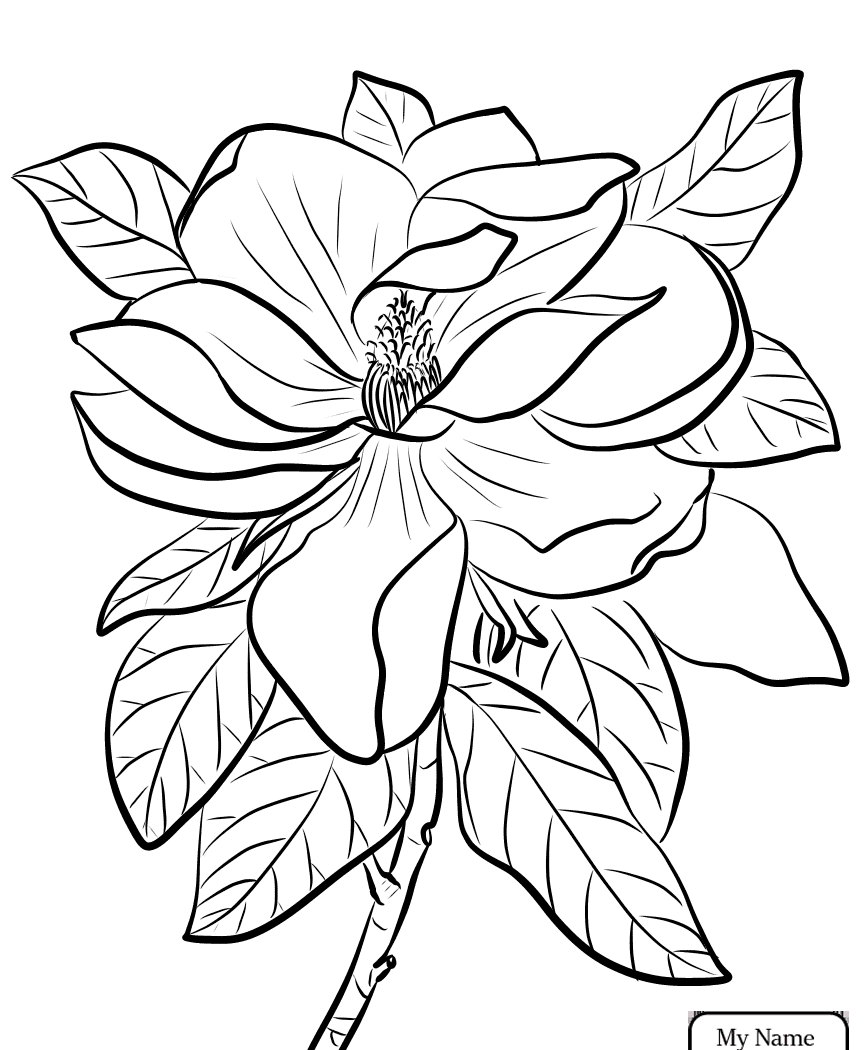 865x1050 Louisiana State Bird And Flower Coloring Page