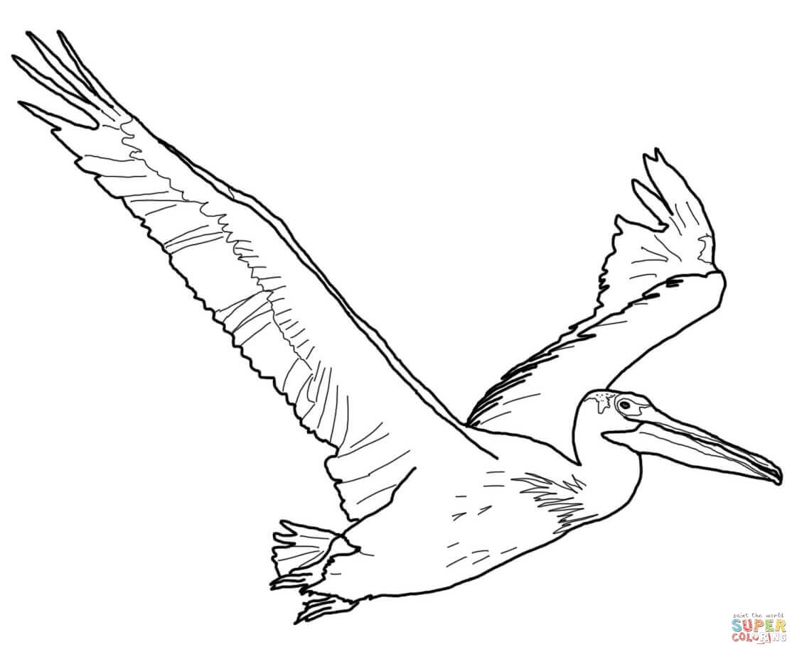 1128x928 Best Of Pelican Page To Color Collection Printable Coloring Sheet