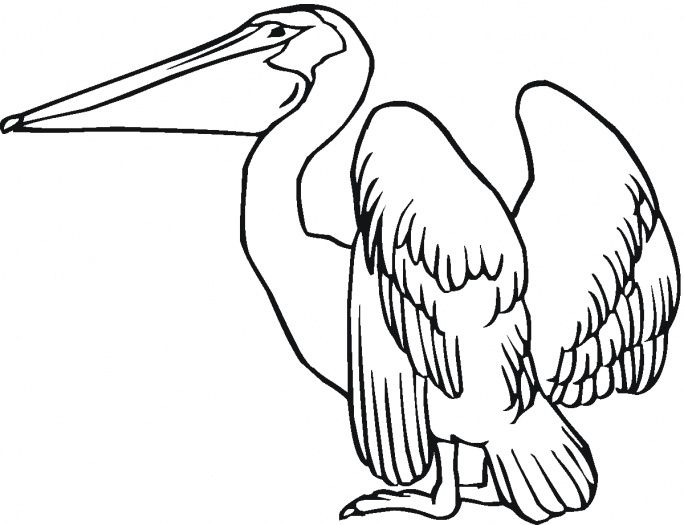 684x525 Pelican Coloring Page Crafts And Other Ideas Craft