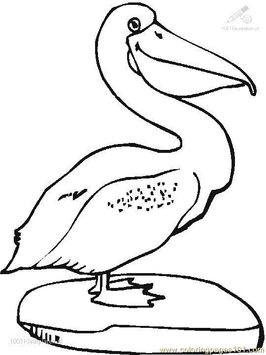 540x720 Pelican Coloring Pages