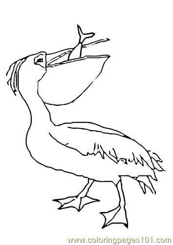 354x500 Pelican Coloring Pages
