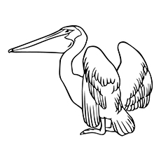 230x230 Top Pelican Coloring Pages For Toddlers