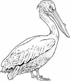 236x276 Pelican Coloring Page Coloring Pages Bird, Mosaics